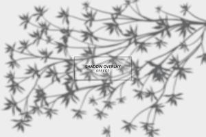 effet de superposition d'ombre végétale sur fond gris vecteur