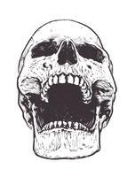 Vecteur de crâne anatomique