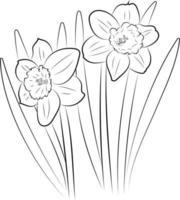 la fleur de jonquille. dessin graphique d'une fleur. vecteur