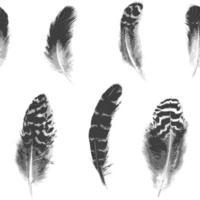 modèle sans couture de plumes noires et blanches d'éclosion de vecteur