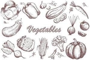 ensemble de légumes de croquis. collecte de légumes du jardin vecteur