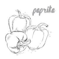 légumes de vecteur. aliments. repas de bouillon. paprika. poivron. vecteur
