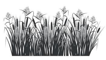 silhouette de roseau et de canne dans l'herbe verte. marais et rivière vecteur