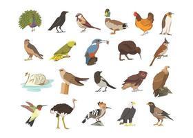 ensemble d'illustrations de livres pour enfants oiseaux, pakshi - pigeon, paon, corbeau vecteur