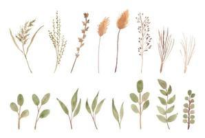 peinture botanique aquarelle roseau et mauvaises herbes vecteur