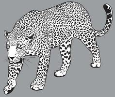 illustration détaillée de vecteur léopard. dessin de jaguar