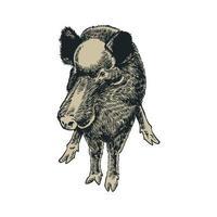 sanglier dessiné à la main gravé vintage vecteur