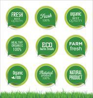 Ensemble de modèles Eco Vintage Labels Bio Design rétro écologie vecteur