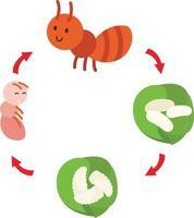 vecteur de fourmi illustration cycle de vie
