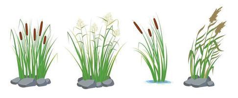 ensemble de canne et de roseaux dans l'herbe verte. plantes des marais et des rivières. vecteur