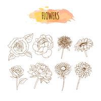 Ensemble de fleurs dessinées à la main. Illustration florale. vecteur