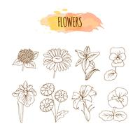 Ensemble de fleurs dessinées à la main. Illustration florale.
