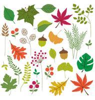feuilles clipart vecteur