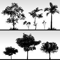 Silhouette d'herbe des arbres.
