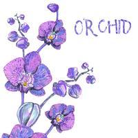 Orchidée rose isolée sur blanc vecteur