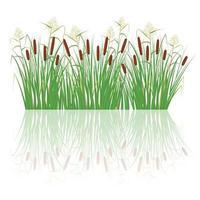 canne et roseaux dans l'herbe verte. plantes des marais et des rivières vecteur