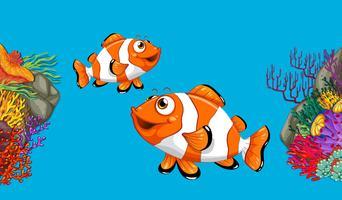 Deux poissons-clowns nageant dans l'océan