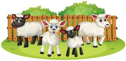 Quatre agneaux à la ferme vecteur