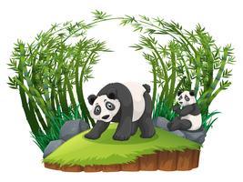 Deux pandas dans une forêt de bambous