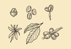 Plantation de café vecteur