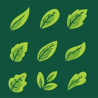 Collection de feuilles vertes Vector Set