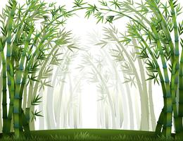Bambou vecteur