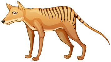 Tigre de Tasmanie vecteur