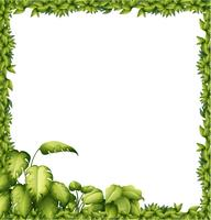 Un cadre vert vecteur