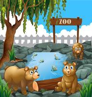 Des ours au zoo