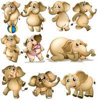 Ensemble d'éléphants vecteur