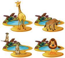 Quatre types d'animaux au bord de l'étang vecteur