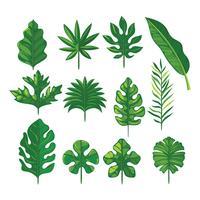 Vecteur série de feuilles tropicales