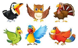 Différents types d'oiseaux