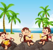Singe mangeant des bananes à la plage vecteur