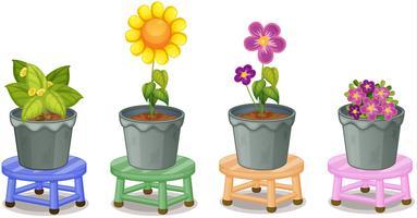 Diverses plantes en pot vecteur