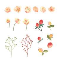 Éléments aquarelles floraux et feuilles définies fleurs luxuriantes peintes à la main