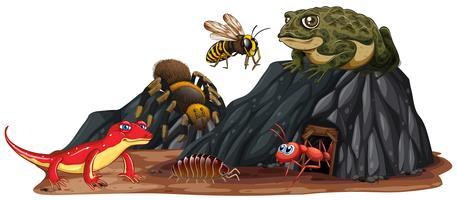 Reptile et insecte dans la nature vecteur