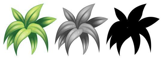 Ensemble de plante isolée