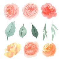 Aquarelle de fleurs aquarelle isolé peint à la main de fleurs d'aquarelle