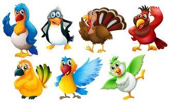 Différentes espèces d'oiseaux vecteur