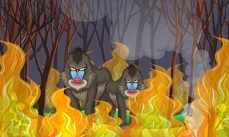Babouins dans la forêt de feu de forêt