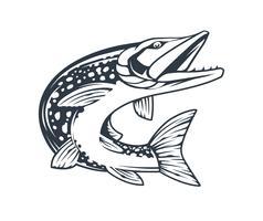 Brochet poisson vecteur monochrome isolé