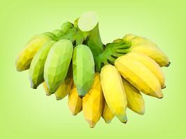 Banane cultivée mi-mûre et non mûre vecteur