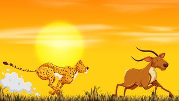 Un léopard à la recherche de nourriture vecteur