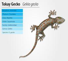 jeton de gecko - gekko gecko vecteur