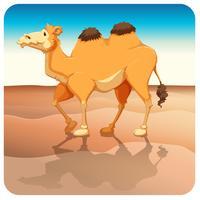 chameau vecteur