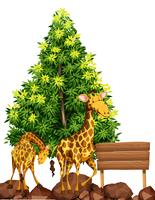 Deux girafes par le panneau en bois