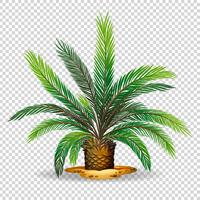 Palmier sur fond transparent