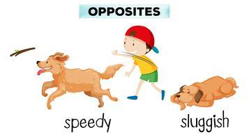 vocabulaire anglais mot opposé vecteur