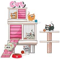 Beaucoup de chatons dans le pethome